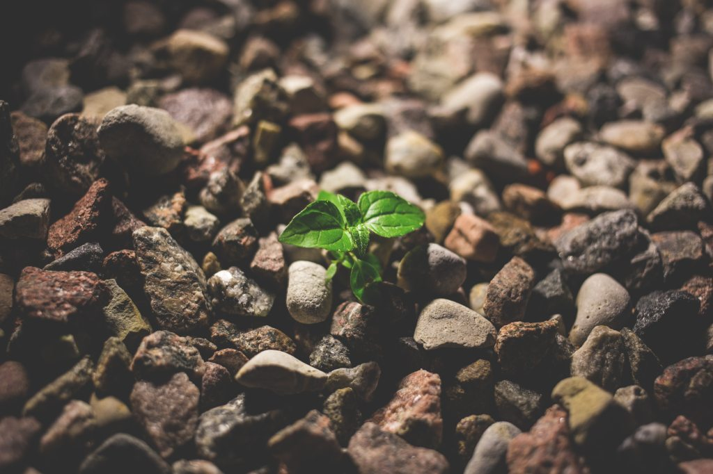 focus-growth-leaves-127713